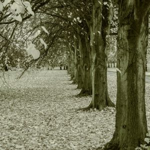 Barlaston trees by Tom Graham