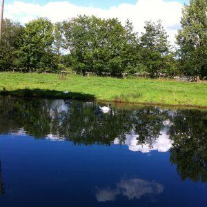 Wedgwood Lake
